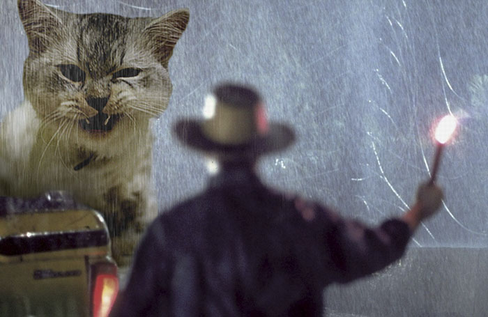 jurassic park dinosaurs replaced with cats 16 5978351341fe8 700